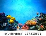 underwater scene. coral reef ... | Shutterstock . vector #137510531
