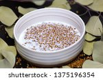 healthy food buckwheat porridge ... | Shutterstock . vector #1375196354