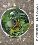 Freshly Foraged Organic Healthy ...