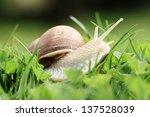 Crawler Snail. Creeper Snail...
