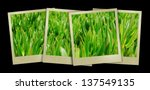 images of beautiful green grass ... | Shutterstock . vector #137549135