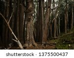 tree trunks at the base of... | Shutterstock . vector #1375500437