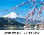 mt fuji and cherry blossom at...   Shutterstock . vector #137554349