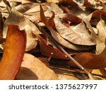 dry mahogany leaves | Shutterstock . vector #1375627997