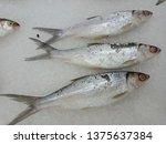 fish fresh  mall purwokerto... | Shutterstock . vector #1375637384