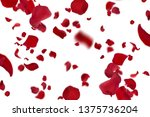 Stock photo red rose petals on white background 1375736204