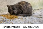 cats is eating food on the... | Shutterstock . vector #1375832921