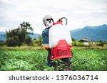 Farmer Spraying Of Pesticide On ...