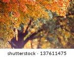 Maple Tree Background.