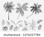 set of palm trees and tropical... | Shutterstock .eps vector #1376227784