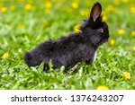 Little Rabbit On Green Grass In ...