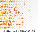 oak  maple  wild ash rowan... | Shutterstock .eps vector #1376351114