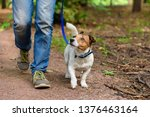 Stock photo concept of healthy lifestyle with dog and man hiking outdoor 1376463164