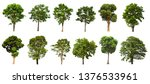 Stock photo isolated tree is located on a white background suitable for all types of applications 1376533961