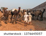 unidentified camel owner with... | Shutterstock . vector #1376645057