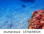 coral reef in egypt as nice... | Shutterstock . vector #1376658524