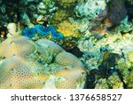 giant clam from egypt as very... | Shutterstock . vector #1376658527