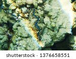 coral reef in egypt as nice... | Shutterstock . vector #1376658551