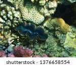 coral reef in egypt as nice... | Shutterstock . vector #1376658554