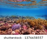 coral reef in egypt as nice... | Shutterstock . vector #1376658557