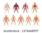 different human organ system... | Shutterstock .eps vector #1376668997