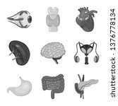 vector design of internal and... | Shutterstock .eps vector #1376778134