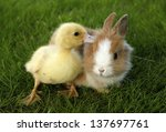 Rabbit Bunny And Duckling Are...
