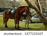Police officer's horses tied to ...