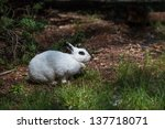 Stock photo white rabbit with black eye in forest 137718071