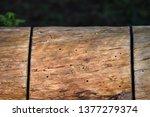a forgotten tree stump with... | Shutterstock . vector #1377279374