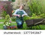 gardener or florist at work....   Shutterstock . vector #1377341867