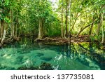 mangrove forests in krabi... | Shutterstock . vector #137735081