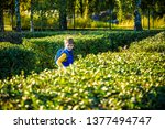 little boy is playing hide and... | Shutterstock . vector #1377494747