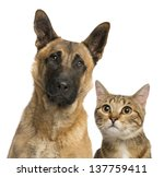 Stock photo close up of a cat and dog isolated on white 137759411