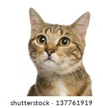 close up of a mixed breed cat ... | Shutterstock . vector #137761919