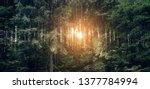 beautiful dense forest in... | Shutterstock . vector #1377784994