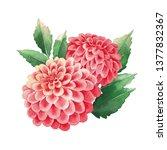 watercolor bouquet of dahlias...   Shutterstock . vector #1377832367