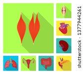 vector design of human and...   Shutterstock .eps vector #1377944261