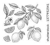 lemon botanical illustration.... | Shutterstock .eps vector #1377952541