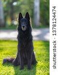 summer portrait of black...   Shutterstock . vector #1378124474