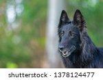 summer portrait of black...   Shutterstock . vector #1378124477