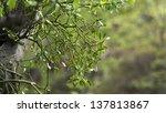 Mistletoe On Tree During Spring