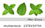 collection of fresh mint leaves.... | Shutterstock .eps vector #1378154744