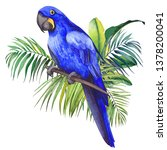 Hyacinth Macaw Parrot Sitting...