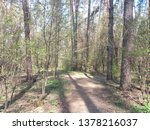 photo forest view | Shutterstock . vector #1378216037