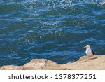 Seagull At Rest By Ocean.