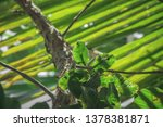 Small leaves on tree,green leaves, capture by nikon d7200.