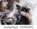 mother cat and kittens | Shutterstock . vector #137855501