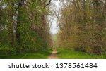a footpath through the woodland ... | Shutterstock . vector #1378561484