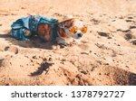 chihuahua wearing sunglasses...   Shutterstock . vector #1378792727